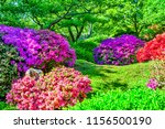 japan garden with trees and... | Shutterstock . vector #1156500190