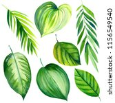 set of green tropical leaves on ... | Shutterstock . vector #1156549540