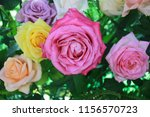 roses are blooming with a... | Shutterstock . vector #1156570723