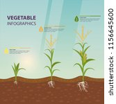 maize growth stages as... | Shutterstock .eps vector #1156645600