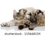 Stock photo the dog and cat lie together isolated on white background 115668154