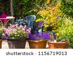 beautiful  summer garden with... | Shutterstock . vector #1156719013
