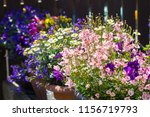 beautiful  summer garden with... | Shutterstock . vector #1156719793
