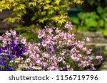 beautiful  summer garden with... | Shutterstock . vector #1156719796
