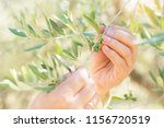 male hands touch olive's branch ... | Shutterstock . vector #1156720519