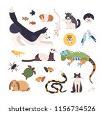 collection of pets isolated on... | Shutterstock . vector #1156734526