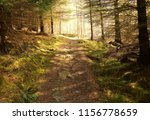 a footpath in the tay forest ... | Shutterstock . vector #1156778659