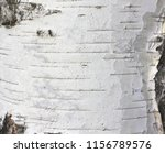 pattern of birch bark with...   Shutterstock . vector #1156789576