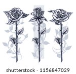 graphic detailed black and...   Shutterstock .eps vector #1156847029