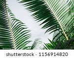 abstract image of green leaf... | Shutterstock . vector #1156914820
