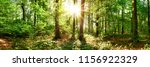 beautiful forest panorama with... | Shutterstock . vector #1156922329