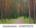 wooded forest trees | Shutterstock . vector #1156970170