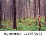 wooded forest trees | Shutterstock . vector #1156970176