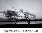 abstract black and white tree background - stock photo