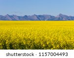 view of rural alberta and a... | Shutterstock . vector #1157004493