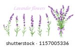 vector illustration of lavender ... | Shutterstock .eps vector #1157005336