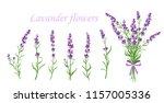 vector illustration of lavender ... | Shutterstock .eps vector #1157005336