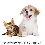Stock photo kitten and puppy are friends 1157018773