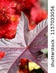 botanical flower  beautiful and ... | Shutterstock . vector #1157033056