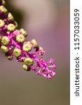 botanical flower  beautiful and ... | Shutterstock . vector #1157033059