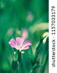 botanical flower  beautiful and ... | Shutterstock . vector #1157033179