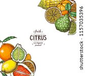 citrus design template. hand... | Shutterstock .eps vector #1157035396
