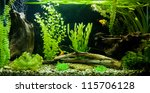 Stock photo a green beautiful planted tropical freshwater aquarium 115706128