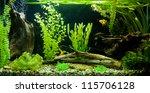 Stock photo a green beautiful planted tropical freshwater aquarium 115706128