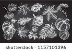 ink hand drawn set of autumn... | Shutterstock .eps vector #1157101396