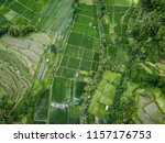 aerial photograph of green rice ... | Shutterstock . vector #1157176753