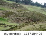 rolling hills covered with high ... | Shutterstock . vector #1157184403