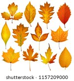 collection beautiful colorful... | Shutterstock . vector #1157209000