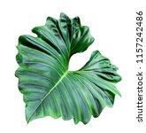 green leaves pattern of... | Shutterstock . vector #1157242486