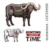 african buffalo animal isolated ... | Shutterstock .eps vector #1157254930