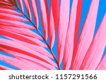 copy space tropical palm tree... | Shutterstock . vector #1157291566