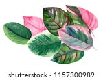 bouquet of leaves  tropical... | Shutterstock . vector #1157300989
