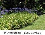 beautiful flowerbed of... | Shutterstock . vector #1157329693