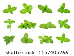 set fresh mint isolated on the... | Shutterstock . vector #1157405266