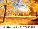 autumn scenery. beautiful gold... | Shutterstock . vector #1157433370