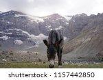 donkey grazing near the...   Shutterstock . vector #1157442850