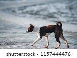 basenji dog in early spring... | Shutterstock . vector #1157444476