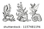 sea shell algae beach hand... | Shutterstock . vector #1157481196