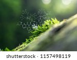 plants background with...   Shutterstock . vector #1157498119