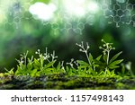 plants background with...   Shutterstock . vector #1157498143