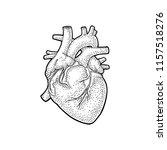 human anatomy heart. vector... | Shutterstock .eps vector #1157518276