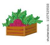 healthy onion vegetables inside ... | Shutterstock .eps vector #1157525533