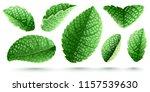 set of fresh green mint leaves. ...   Shutterstock .eps vector #1157539630