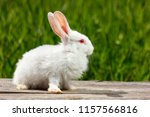 Stock photo cute little white rabbit on a green background sits on a wooden board 1157566816
