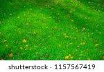 fall leaves scattered all over... | Shutterstock . vector #1157567419