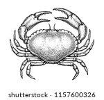 ink sketch of brown crab... | Shutterstock .eps vector #1157600326